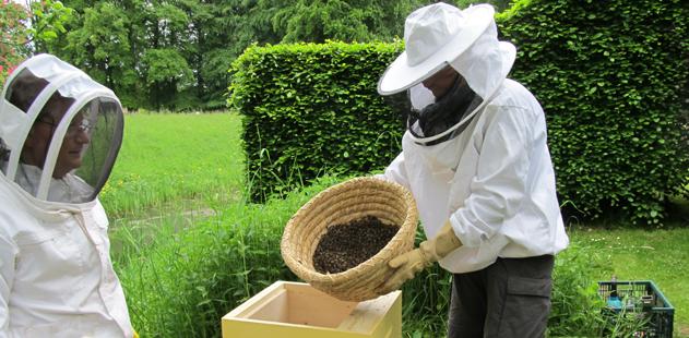 Bijen op Bingerden